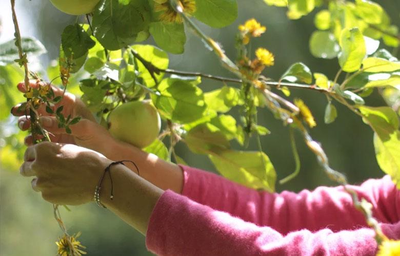 Le coeur du hérisson propose d'apprendre la permaculture